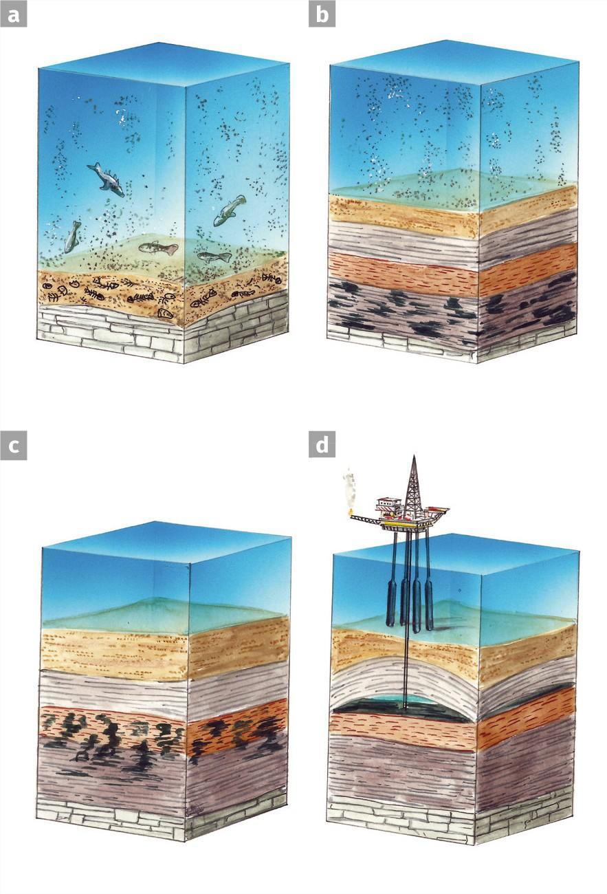 Les étapes de la formation du pétrole et du gaz.