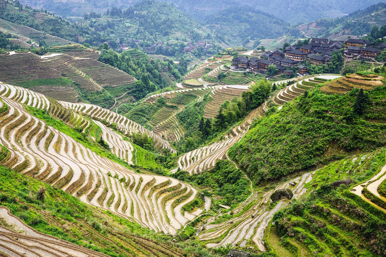Rizières en terrasses à Huatian