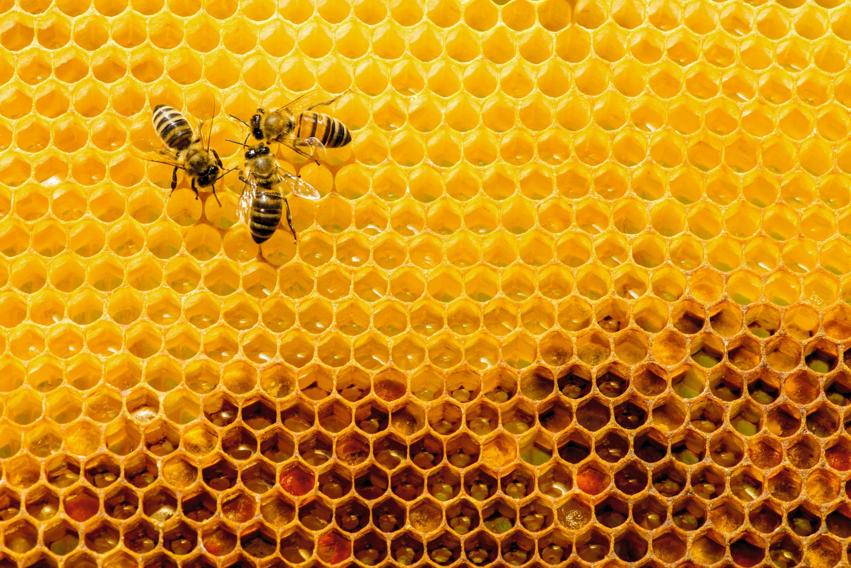 Probabilités conditionnelles - Synthèse - abeilles