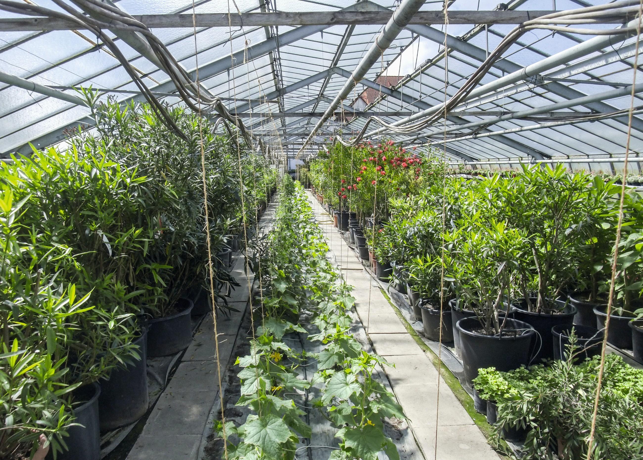 jardinerie - horticulteurs