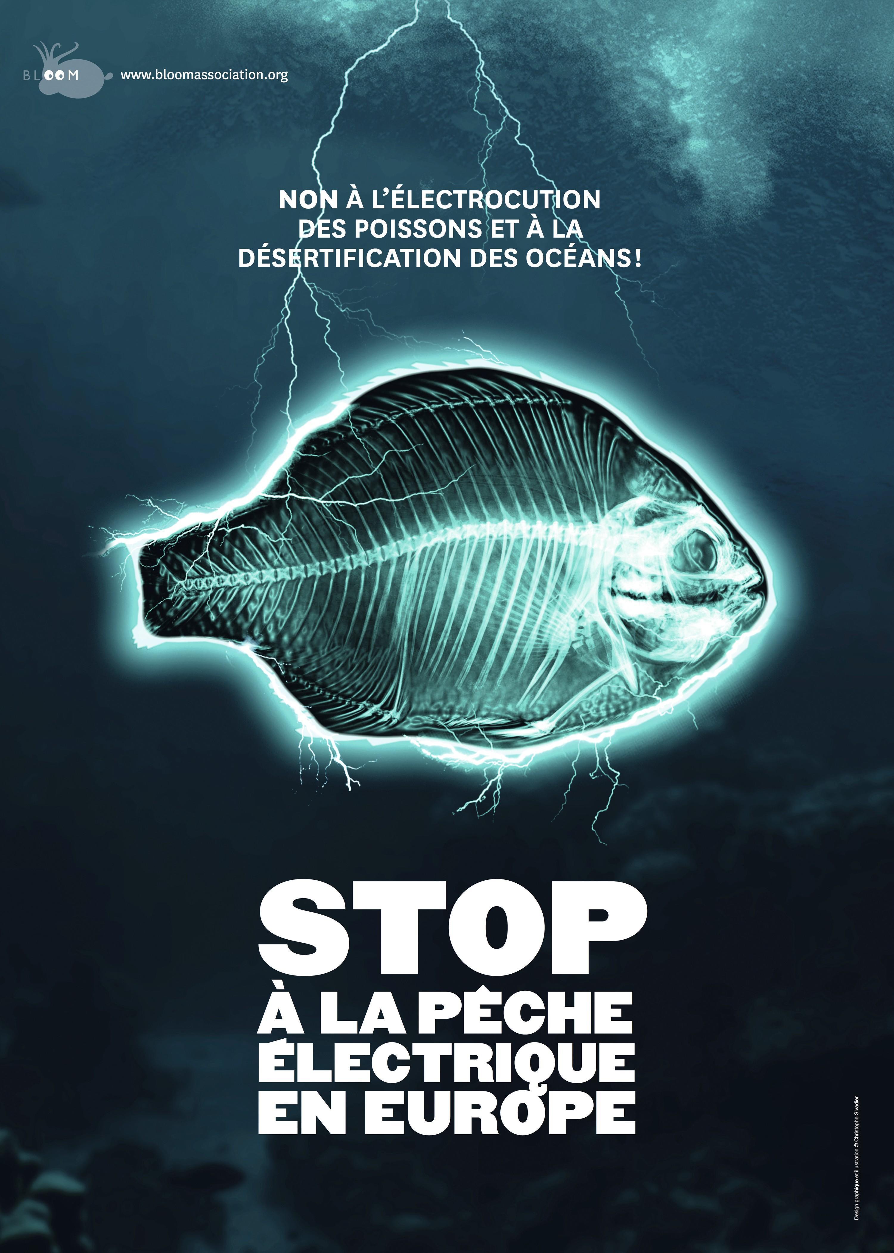 Campagne de l'ONG Bloom contre la peche électrique