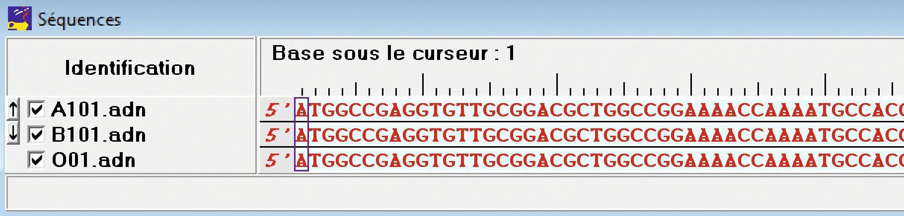 Tableau de comparaison des séquences nucléotidiques des allèles A, B, O.