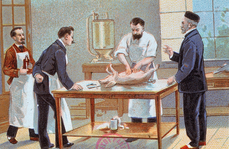 Louis Pasteur et ses collaborateurs travaillant sur le rouget du porc (années 1880).