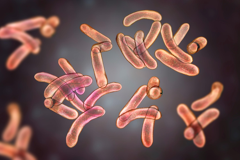 Photographie de bactéries responsables du choléra