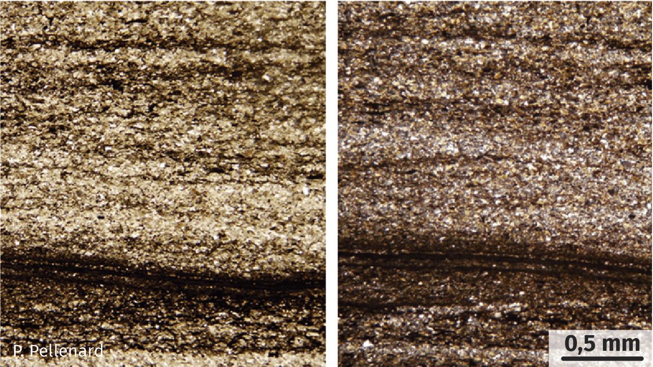 Pélite observée au microscope polarisant.
