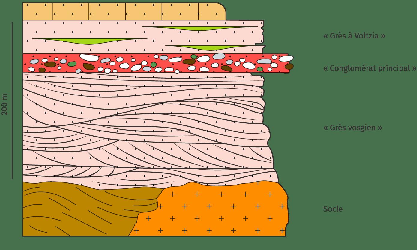 Colonne stratigraphique réalisée dans les Vosges