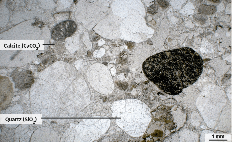 Molasse observée au microscope polarisant (LPNA).