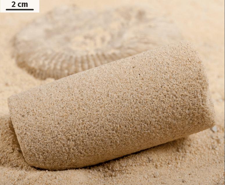 Cylindre de sable transformé en grès par des bactéries Bacillus pasteurii