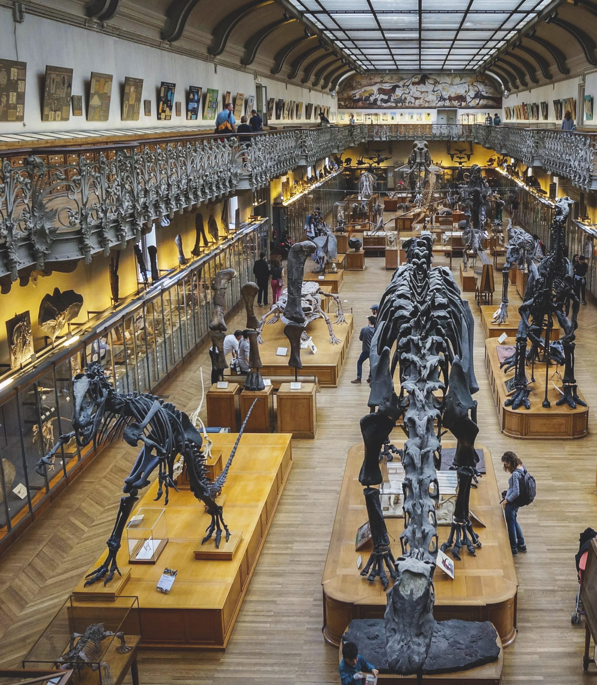 Galerie de paléontologie du Museum national d'histoire naturelle (Paris).