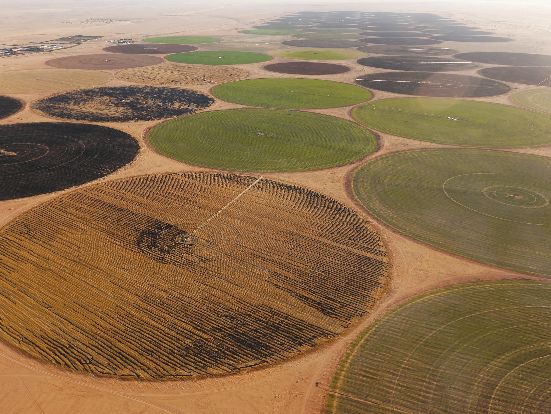 Des champs irrigués dans le désert libyen.