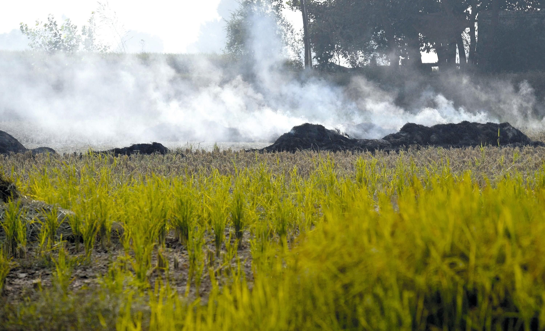Les brûlis, un facteur de pollution atmosphérique