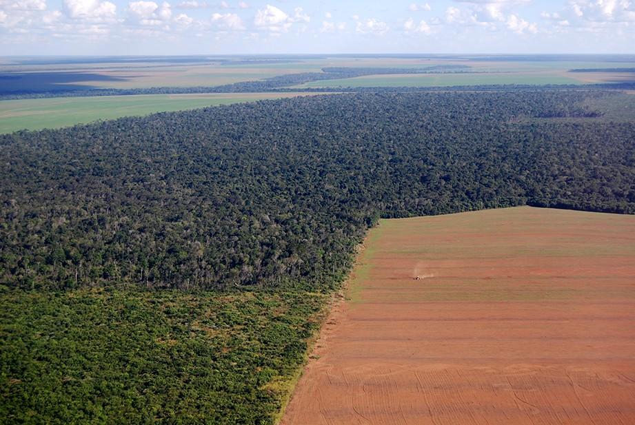 L'Amazonie victime des cultures d'agro-exportation